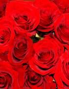 Rosas rojas romanticismo